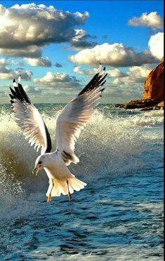 Birds flying in the sky beautiful bird flying in the sky 49 Best ideas Beautiful Birds, Animals Beautiful, Beautiful Creatures, Beautiful Sunset, Beautiful Places, Beautiful Pictures, Image Nature, Sea Birds, Seascape Paintings