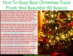 How To Keep Real Christmas Trees Fresh and Beautiful All Season! More info here: http://homesteadingsurvival.com/how-to-keep-real-christmas-trees-fresh-and-beautiful-all-season/