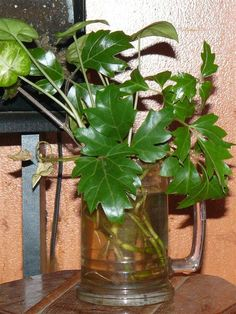 Helpful short article on propagating plants in water.
