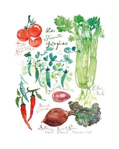 Vegetable poster - Botanical print - Kitchen art - Watercolor Food - Green wall decor painting