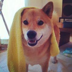 Community Post: The Most Popular Dog On Instagram