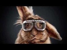 イースターにちなんだ独・家電量販店のエクセレントなPR『2,000万人が見守るウサギのかけっこ競争』 | AdGang