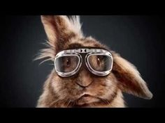 MediaMarkt - The Rabbit Race - Idea: A live streamed rabbit race in which everyone who purchased something at the MediaMarkt has the change to win half of their money back. - Cannes Lions 2015 - Branded content and entertainment