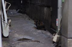 瞳語り from my fotoblog