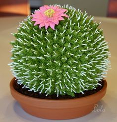 Cactus with a single pink bloom