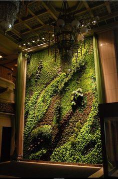 Green walls and warm wood