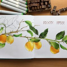 """""""I woder how, I wonder why yesterday you told me 'bout the blue sky and all that I can see is just a yellow lemon tree... is just another lemon tree """" #sketching #copicsketchmarker #sketchbook #drawing #illustration #maxgoodz #markerspro_maxgoodz #copicmarkers #lemon #lemontree #yellow #green"""
