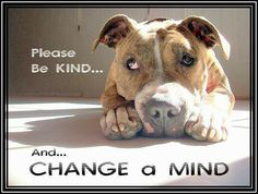 Pitbulls - they are very misunderstood. Stand up for them. They are not all bad, only the people that abuse them.