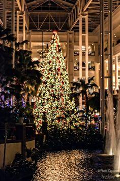 Hotel Christmas Tree Nashville ,TN