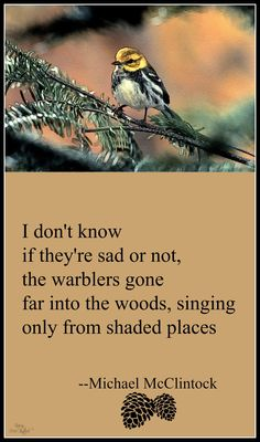 Tanka poem: I don't know -- by Michael McClintock.