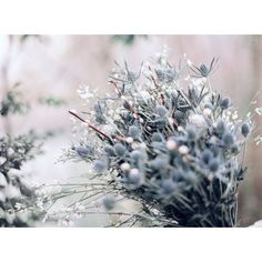Enchanting Winter Wedding Inspiration in Moody Shades of Blue ❤ liked on Polyvore featuring backgrounds and wedding