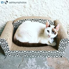 #Repost @ashleymphotos - Homie's sofa #kinghomerkitten #tiledit #cats #tiledit  www.thetileapp.com