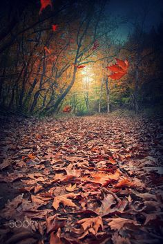 Leaves of November... by Makis Bitos on 500px