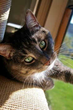 """""""Cats dwell within the circle of their own private thoughts."""" --Agnes Repplier"""