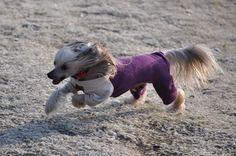 puppies mechelse herder-kruising stafford - Google zoeken