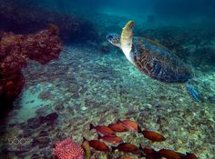 Graceful Reptile by chr1st0sm1t #nature #photooftheday #amazing #picoftheday #sea #underwater