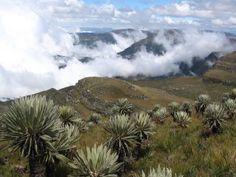 Frailejones Colombia Mountains, Google, Nature, Plants, Travel, Colombia, Naturaleza, Viajes, Destinations