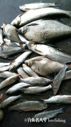 latest fish qiao lake