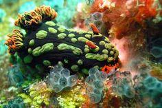 belleza en las profundidades de la tierra en el  mar