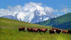 Col des Aravis et vue sur le Mont Blanc - La Clusaz 2007