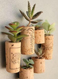 Questa è un'idea davvero insolita per creare dei piccoli vasetti per piantine grasse!  www.ortopertutti.it