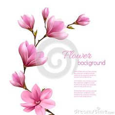 Fondo della natura con il ramo del fiore della magnolia rosa Floral Drawing, Watercolor Flowers, Watercolor Art, Ramo Tattoo, Pink Flowers, Beautiful Flowers, Magnolia Tattoo, Cherry Blossom Art, Magnolia Flower