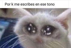 We live in a society Cute Memes, Dankest Memes, Funny Memes, Funny Shit, Meme Stickers, Pinterest Memes, Spanish Memes, Meme Template, Cartoon Memes