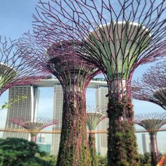Singapore の Gardens By The Bay