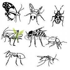 Výsledek obrázku pro kreslené obrázky hmyzu