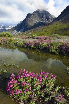 Photographic Print: Dwarf Fireweed Blooms in Flooded Meadow Near Turquoise Lake with Telaquana Mtn Lake Clark Nat Park by Design Pics Inc : Rio, Beautiful Places, Beautiful Pictures, Amazing Places, All Nature, Lake Life, Cool Places To Visit, Beautiful Landscapes, The Good Place