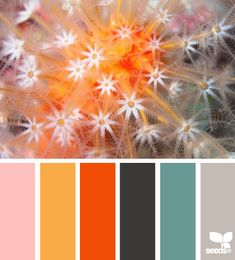 Amazingly exciting palette for a high Innovation or Playfulness value. #VoiceValues | underwater hues via Design-Seeds | commentary via The Voice Bureau at AbbyKerr.com