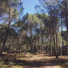 @jdamaral We still have pine trees here.