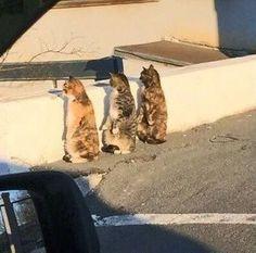 Gatos: estas criaturas incríveis fontes simples e sem fim de alegria e a garanti ade um bom humor.