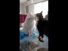 Cats Are Friends, Friends, Friends ... ENEMIES