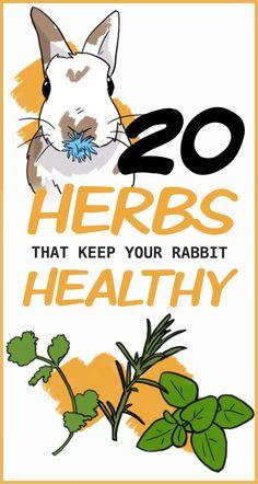 Rabbit Diet, Pet Rabbit, Bunny Care Tips, Raising Rabbits For Meat, Mini Lop Bunnies, Rabbit Information, Rabbit Wallpaper, Indoor Rabbit, Pet Corner