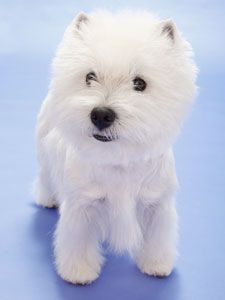 Getting one of these babies when I have nothing to do but brush my dog!