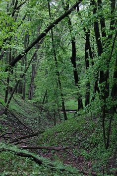 Spring in Neale Woods- Omaha, NE | Flickr - Photo Sharing!