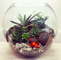 Fish bowl plant bowls