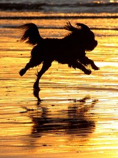 If you love dogs like us, OB's Dog Beach is great for pet and owner! Dog Beach, Ocean Beach, Holiday Cottages In Cornwall, San Diego, Dog Friendly Holidays, Silhouette Photography, Group Of Dogs, Dog Photos, Beach Photos
