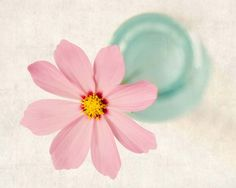 "Fine Art Flower Photography Print """"Pink Cosmos"""""