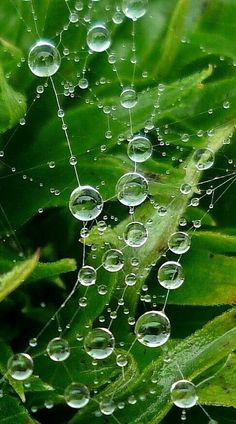 dew drops and spider webs, can anything be   more amazing