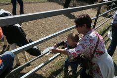 Douglasdale Dairy Farm- Santon, South Africa Farm Animals, South Africa, Dairy, Tours, Places, Fun, Lugares, Hilarious