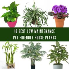 Pets and plants both add beauty to your life and home. Here Is A List 18 Best Low Maintenance Pet Friendly House Plants>>http://bit.ly/2pqeH3w #Garden #Pets #Nature