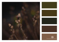 Color Palette Tuesday - Earth