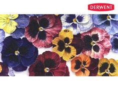 'Pansies' by Susie Lidstone - Created using: Derwent Inktense Pencils.