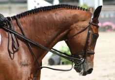 Learn how to braid and band your horse's mane like a professional. Judge, coach, and trainer Lindsay Grice explains how. www.horsejournals.com/horsewise-braid-and-band-professional