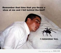 """I'm thinking """"Oh hell no!"""" is an understatement. I am of the opinion that the best kind of spider is the dead kind."""