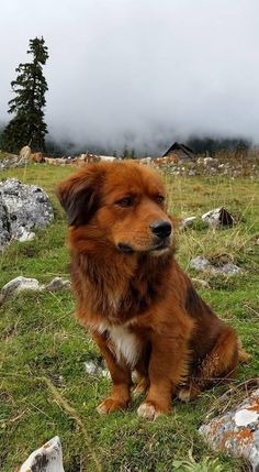 My girlfriends mother is in Romania. This was her guide through the mountains. #aww #cute #cutecats #dinkydogs #animalsofpinterest #cuddle #fluffy #animals #pets #bestfriend #boopthesnoot