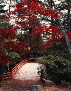 Miyajima, Hiroshima, Japan Geisha, Beautiful World, Beautiful Places, Japanese Countryside, Japan Landscape, Hiroshima Japan, Nagasaki, Japan Travel Tips, Parcs