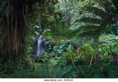 Vaipahi Waterfall, Tahiti French Polynesia - Stock Image
